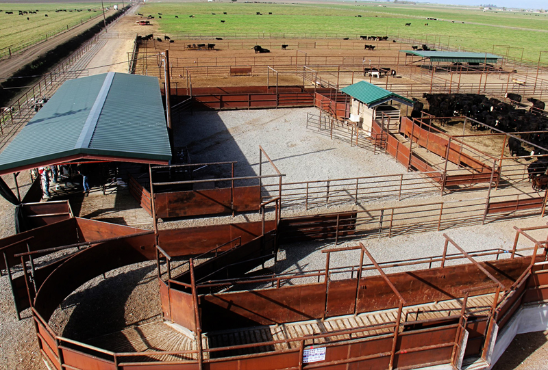 Livestock Facilities Western Fence Company